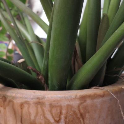 Pot plante Cabinet Sens 2